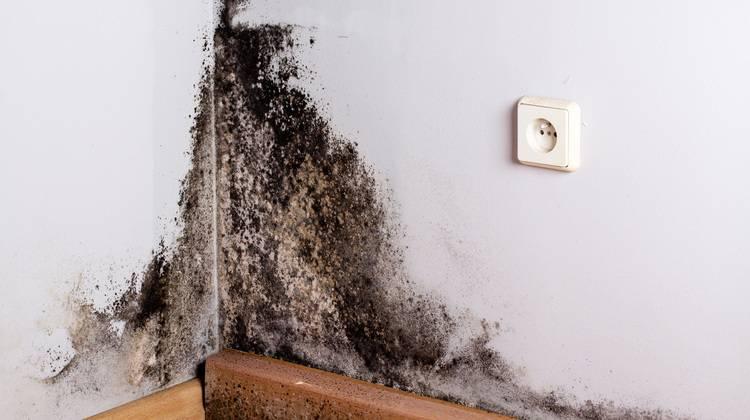 Schimmelpilzbefall im Haus vorbeugen und beseitigen